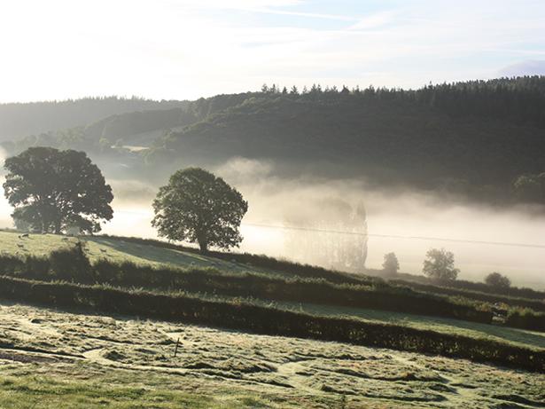 view-mistyfields2