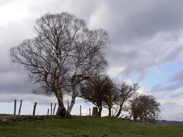 treesattop
